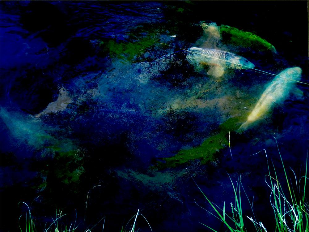 Under water  - unter Wasser